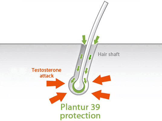 Protection of the hair roots